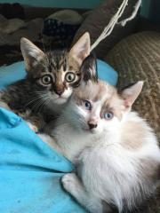 Luca und Leo
