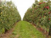 Marmelade und mehr