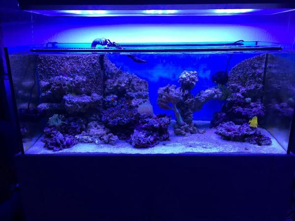Meerwasser aquarium 300 liter komplettset in eberbach for Aquarium komplettset
