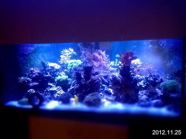 meerwasser aquarium komplett abzugeben inkl besatz und. Black Bedroom Furniture Sets. Home Design Ideas