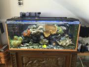 Meerwasser-Aquarium komplett