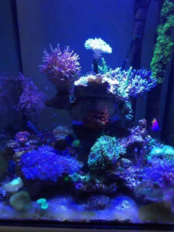 Aquarium und fische in sindelfingen kaufen bei deine for Salzwasser aquarium fische