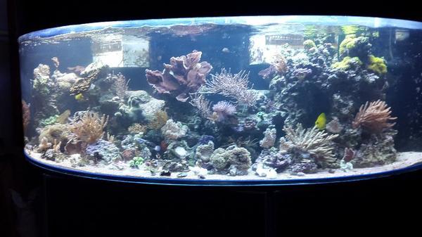 meerwasser meerwasseraquarium komplett zu verkaufen in. Black Bedroom Furniture Sets. Home Design Ideas