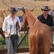 Natural Horsemanship Dresden