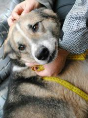 Nero ist eine Seele von Hund Nero ist eine Seele von Hund Nero ist eine Seele von Hund. Nero liebt die Menschen und mit seinem sanften Scharm wickelt er alle um die Pfote. Nero ... 300,- D-38110Braunschweig Bienrode Heute, 21:53 Uhr, Braunschweig Bienrode - Nero ist eine Seele von Hund Nero ist eine Seele von Hund Nero ist eine Seele von Hund. Nero liebt die Menschen und mit seinem sanften Scharm wickelt er alle um die Pfote. Nero