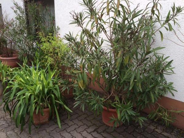 pflanzen b ume str ucher pflanzen garten mannheim. Black Bedroom Furniture Sets. Home Design Ideas
