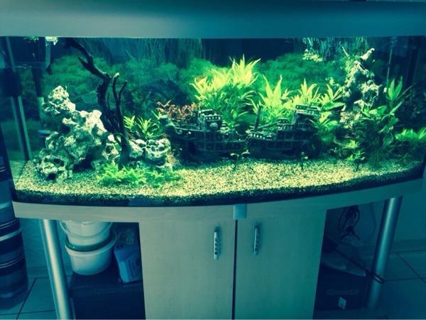Panorama aquarium 350 liter in hagenbach fische for Aquarium 350 litres