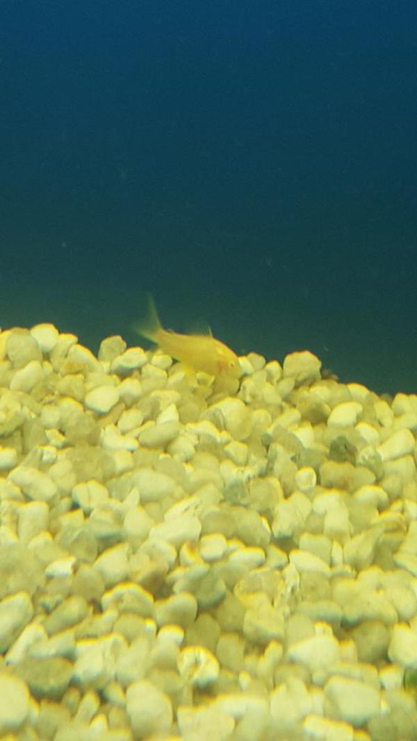 Albino panzerwels kleinanzeigen tiermarkt deine for Fadenfische zucht