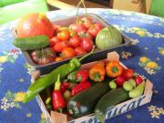Paprika und Chili -