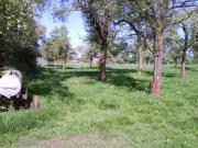 Pferdeboxen/Padockplätze,Bio-