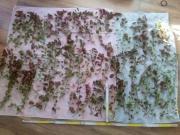 Pflanzenpaket XXXL (für