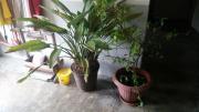 Pflanzentöpfe komplett 2x