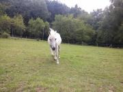 Pflegebeteiligung für Ponystute