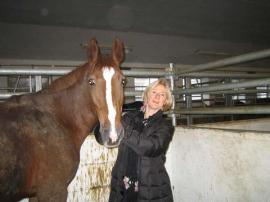 tiermarkt pferde studentin sucht reitunterricht bevorzugt