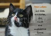 Pflegekatzen-Postkarten