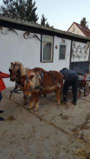 Ponygespann zu verkaufen