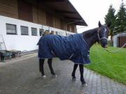Rainhorse 1200