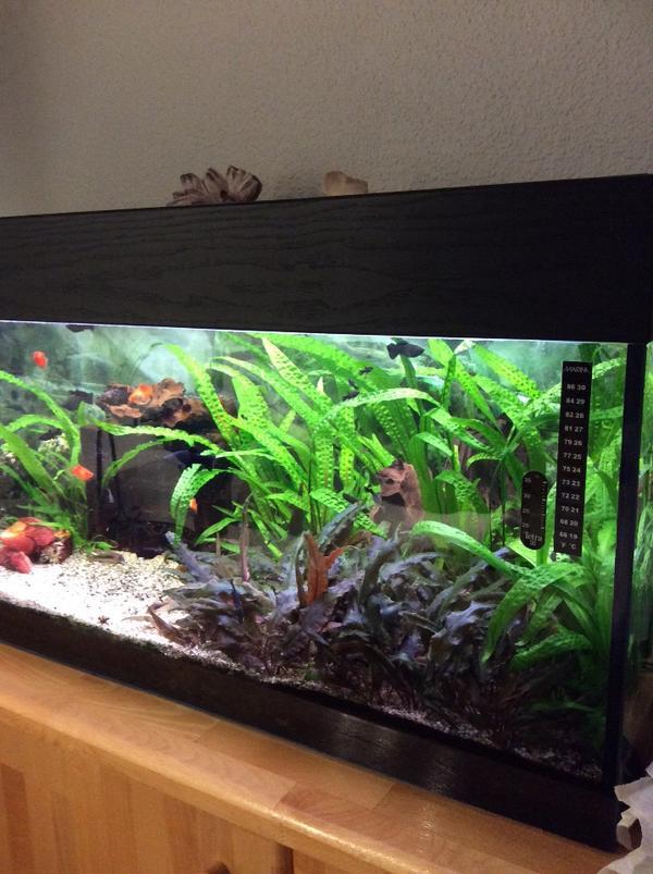 sch nes gepflegtes aquarium in karlsruhe fische. Black Bedroom Furniture Sets. Home Design Ideas