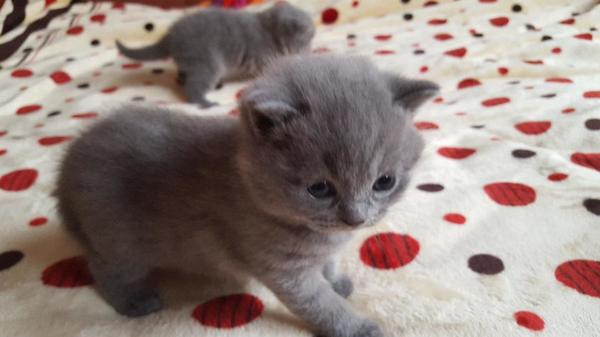 Katzen Kaufen Pforzheim