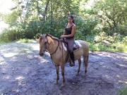 Shettys, Esel, Ponys,
