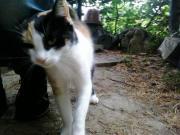 Strassen/Futterplatzkatzen suchen