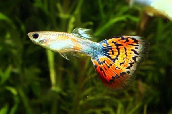 Gartenmobel Outlet Affalterbach : Suche Aquarium  Fische (zu verschenken) in München  Fische