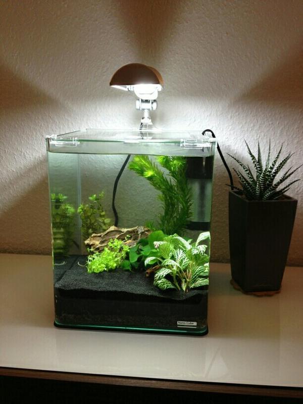 suche nano cube aquarium garnelen krebse zu verschenken in m nchen fische aquaristik. Black Bedroom Furniture Sets. Home Design Ideas