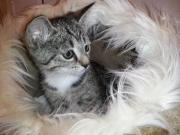 Süße BABY Kätzchen