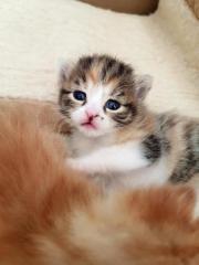 Süße Katzenbabys ab