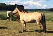 Süßes Pferdchen sucht