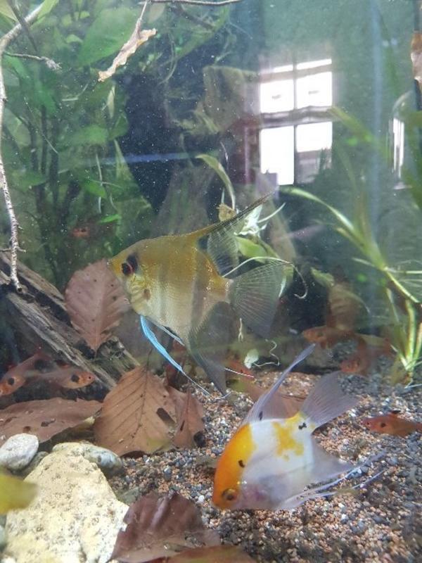 Tausche Besatz In Insheim Fische Aquaristik Kaufen Und