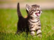 Tiebetreuung / Katzen / Kleintiere