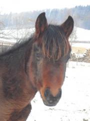 Toller Quarter Horse