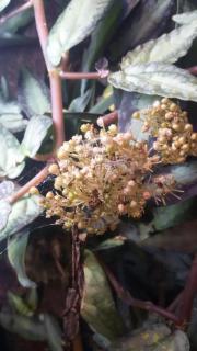 Tropische Pflanzen, Ranke