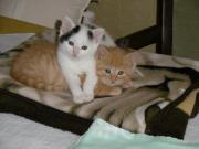 Unsere Katzenkinder suchen