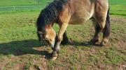 Weideland für Pferdehaltung