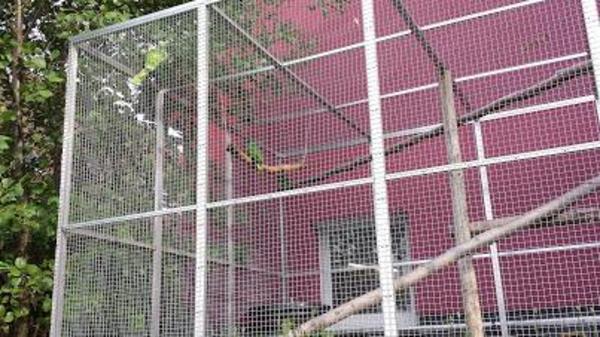 wellensittich papageien kanarien sittiche sie suchen ein. Black Bedroom Furniture Sets. Home Design Ideas