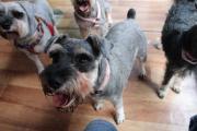 Wilma sucht hundeerfahrene