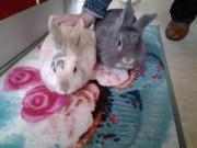 Wuschl & Emma, 3