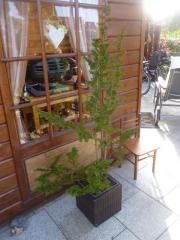 2 Pflanzen