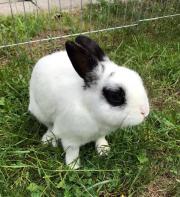 5 Jähriges Kaninchen