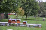 5X Bienenvölker