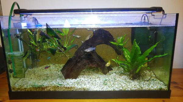 60 liter aquarium fische 1000 aquarium ideas. Black Bedroom Furniture Sets. Home Design Ideas