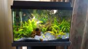 Aquarium 80l mit