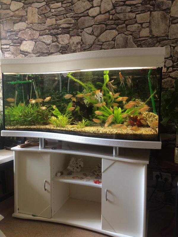 aquarium fischen gebraucht kaufen nur 2 st bis 70 g nstiger. Black Bedroom Furniture Sets. Home Design Ideas