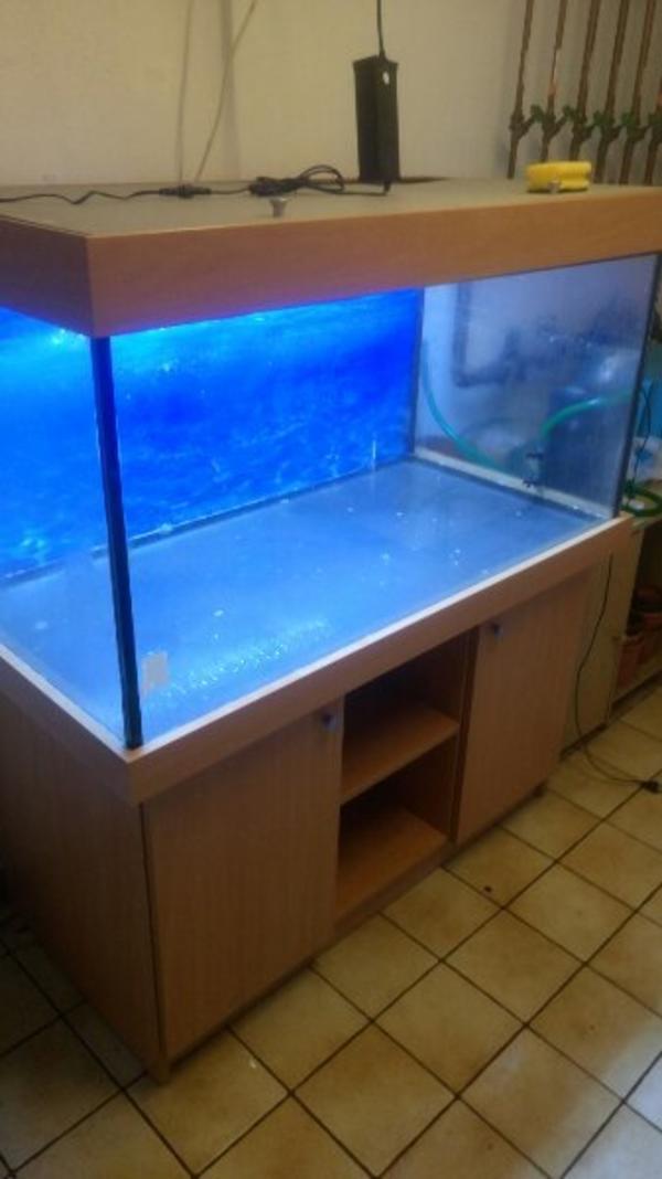 aquaristik in hallstadt bei deinetierwelt. Black Bedroom Furniture Sets. Home Design Ideas