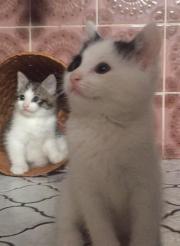Baby Katze