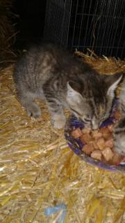 Babykatzen vom Bauernhof