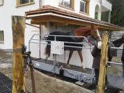 BOGENHARD Pferdelaufbänder NEU