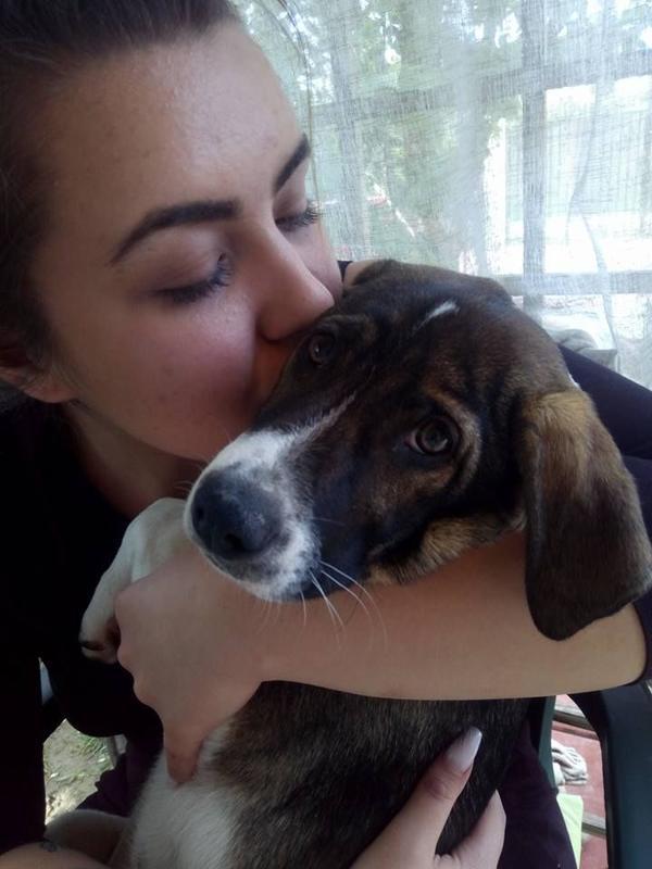 Bruno sucht Familienanschluss » Hunde
